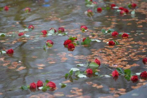 NEVER FORGOTTEN: Roses, thrown by families and relatives of people who are missing, in the pond at Farmleigh during the fourth annual Missing Persons Day ceremony. Photograph: Alan Betson/The Irish Times