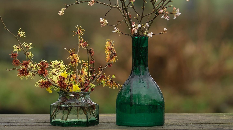 Tiny blooms light up the winter garden