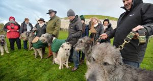 Ivan Gargan from the Irish Wolfhound Club at Newgrange for the winter solstice. Photograph: Alan Betson/The Irish Times