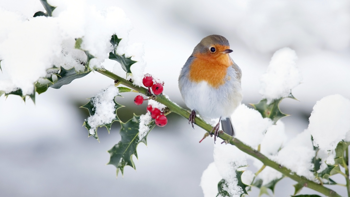 Hibernation, torpor and holly: how animals survive winter