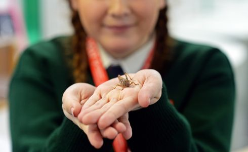 "LARRY THE LOCUST: Molly Measey, Pobalscoil Iosolde, Palmerstown, Co Dublin, with ""Larry the Locust"", from her project on environmental insecticide for use in developing countries, at the BT Young Scientist & Technology Exhibition, at the RDS. Photograph: Eric Luke/The Irish Times"