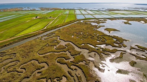 Aerial view of rice fields and marshes along the Sado river. Comporta, Alentejo, Portugal