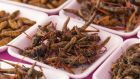 Anthonie Van Wilderoden set up a company that sells insects as a speciality foodstuff. Photograph: David Buffington/Getty Images