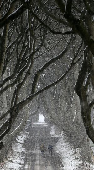 "THE DARK HEDGES, ANTRIM: Snow at the beech-planted The Dark Hedges attraction in Co Antrim, as blizzard conditions were set to sweep in, bringing ""a real taste of winter to the whole of the UK"". Photograph: Niall Carson/PA Wire"