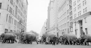 A policeman  directs circus  elephants across  Fifth Avenue  in New York in 1955. Photograph: Jacob Harris/AP