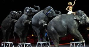 Ringling Bros and Barnum & Bailey elephants  in New York, 2010. Photograph: Emmanuel Dunand/AFP/Getty