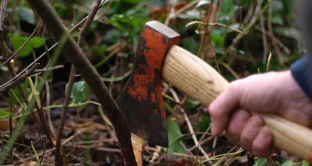 fb81c4be7f588 Hedge layer Mark McDowell partially slices the base of a blackthorn branch.  Photograph: Richard