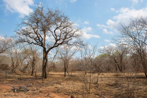 The parched landscape near Funhalouro, Mozambique. Temperatures regularly hit 40 degrees celsius.