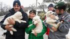 Rescuers hold three puppies that were found alive in the rubble of the avalanche-hit Hotel Rigopiano. Photograph: Alessandro Di Meo/AP/ANSA