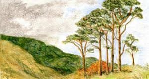 Scots pines at Doolough, Co Mayo. Illustration: Michael Viney