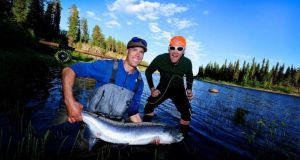 Magnificent Baltic salmon from the Lainio river in Swedish Lapland