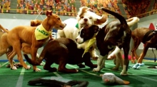 Prepare for Puppy Bowl XIII