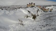 A winter walk on snowy, seductive Galtybeg