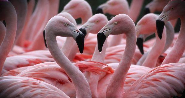 Valentine S Day Expense Not Necessarily The Hallmark Of Love