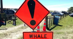 A whale stranding sign at Farewell Spit in New Zealand. Photograph: AFP/Getty Images