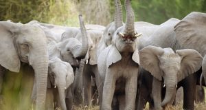 Gorongosa National Park in Mozambique: members of the public use webcams to detail the wildlife captured throughout the park. Photograph: Getty Images