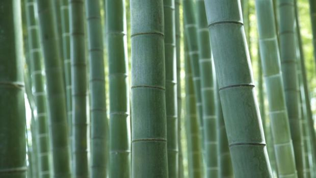 Bamboo is one of the most sustainable, strong and adaptable products available
