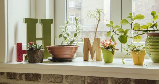 Houseplants can remove up to 90 per cent of toxins and dangerous chemicals within 24 hours