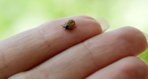 Lyme disease The tiny tick that packs a huge punch