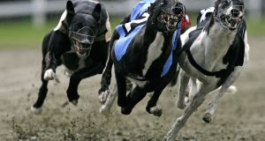 An Independent Senator said there were significant issues of public concern in the greyhound industry which received State funding of €16m a year. File photograph: Peter Kohalmi/AFP/Getty Images
