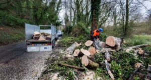 Leonard Skelly of Castleknock Tree Care Ltd removing a tree that fell during storm Doris at the Strawberry Beds, Dublin.    Photograph: Brenda Fitzsimons / The Irish Times