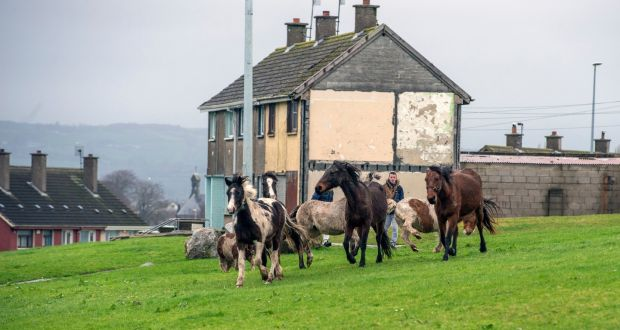 limerick horse project seeks to provide a haven for youths
