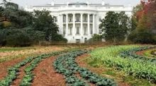 Grow your own: Michelle Obama took a spade to the White House's South Lawn in 2009 to make a kitchen garden