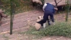 Clingy panda cub becomes viral sensation