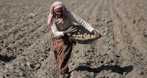 Am Indian woman in a potato field. The UN forecasts India's population might be 1.7bn by 2050