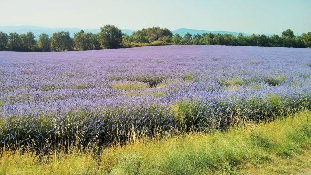 An Irishman making a home on a lavender farm in Provence