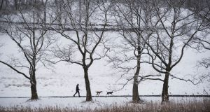 The Rockefeller State Park Preserve in Sleepy Hollow, New York. Photograph: Joshua Bright/The New York Times