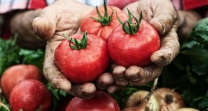 """My beloved knows a tomato to be a tomato. She calls the potato a potato... This practicality may be a mark of all women in their multitasking virtuosity, or it may be unique to my beloved"""