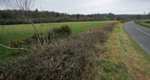 The Heritage Bill proposes to allow the cutting of hedgerows from August 1st each year, rather than from September 1st. Photograph by Frank Miller