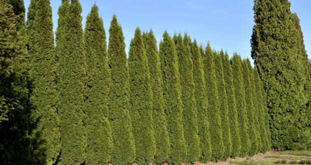 The Boundary Hedge Is Full Of Beautiful Old Trees Photograph Istock