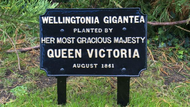 Plaque commemorating planting of tree by Queen Victoria in 1861
