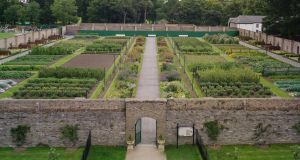 Visitors to Phoenix Park can appreciate the impressive beauty and productivity of the Ashtown Victorian kitchen garden. Photograph: Richard Johnston