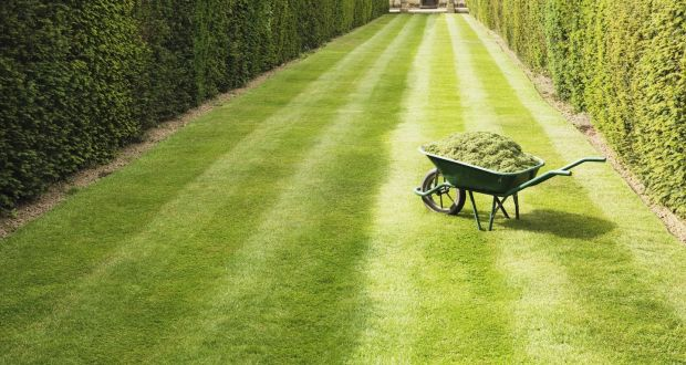 2d12aa8b44b93 Start now to ensure velvet smooth lawn this summer