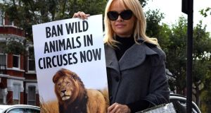 Model and actor Pamela Anderson: sent a letter urging  the Taoiseach to implement a nationwide ban on wild-animal circuses.