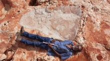 World's largest known dinosaur footprint discovered in Australia