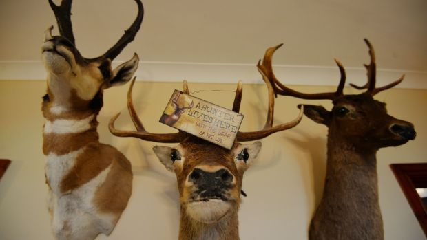 Trophies in the home of deer hunter John Lalor, a member of Ardfinnan, Ballybacon, Grange and Newcastle Gun Club near Cahir, Co Tipperary. Photograph: Alan Betson