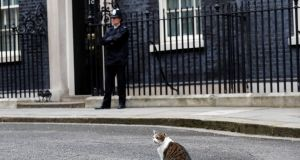 LARRY VOTES LEAVE: Larry the Downing Street cat outside number 10 after prime minister Theresa May left to announce that she was triggering the UK exit from the European Union. Photograph: Stefan Wermuth/Reuters