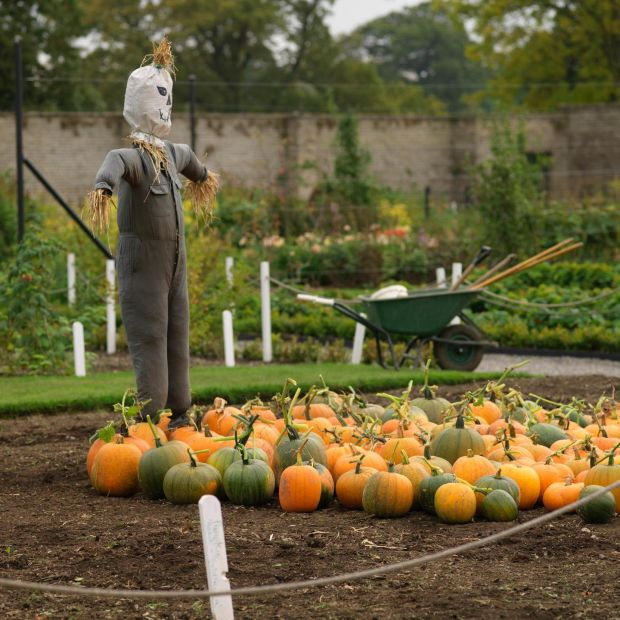 Pumpkin season in Ashtown walled garden . Photo credit Richard Johnston