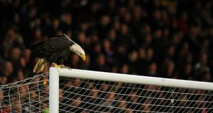 Crystal Palace mascot Kayla the bald eagle sits on the crossbar at Selhurst Park. Photo: Getty Images
