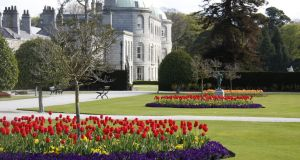 Tulips in full bloom in Powerscourt, Co Wicklow. Photograph:  Sara Waldburg