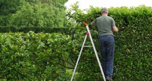 A property owner may cut any portion of the hedge that lies exclusively on their property