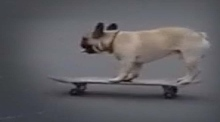 Skateboarding dog steals the show in London park