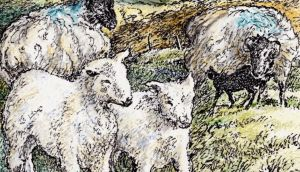 Decline in hill farming: only 8,500 commonage farmers have sheep, and only 6,000 of these have mountain breeds. Illustration: Michael Viney