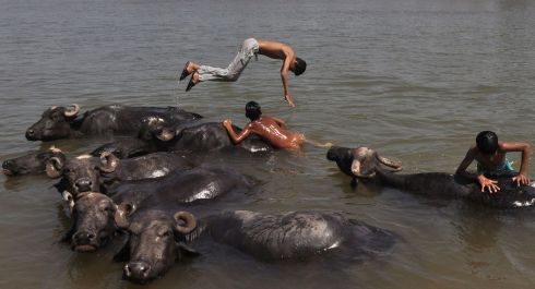 BUFFALO STANCE: Indian nomad youths play in the water with their herd of buffaloes, in the Tawi River. Photograph: AFP/Getty Images