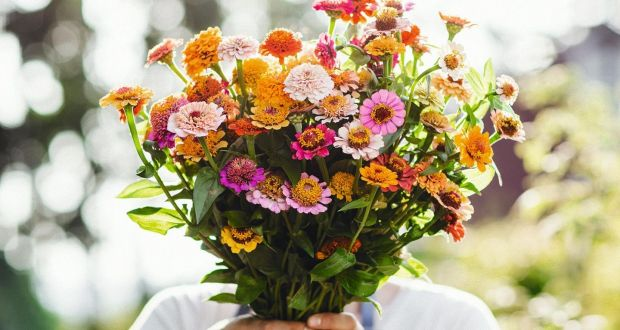 Cutting Edge Flowers Without The Airmiles