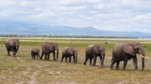 A family of elephants make their way home after a long day in Amboseli National Park. Photograph: Ciara Kenny